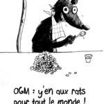 TOXICITE DES OGM SUR LES RATS